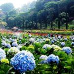 Wisata Di Taman Bunga Batu Malang